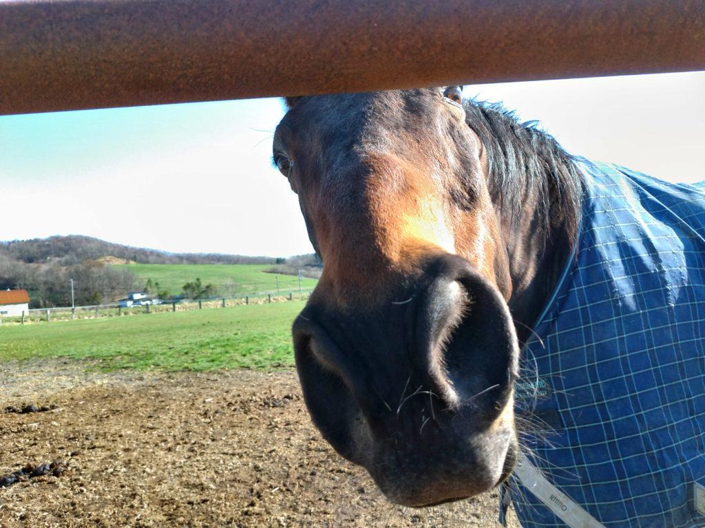 あの名馬は今~ナイスネイチャの2019年現在~渡辺牧場にて | うまぶくろ